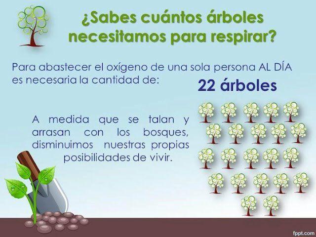 Cuantos arboles se necesitan para respirar?? Aqui la respuesta.. #Conciencia