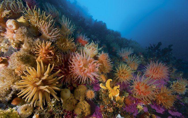 Arquipélago norueguês tem ecossistema marinho brilhante e cheio de cor