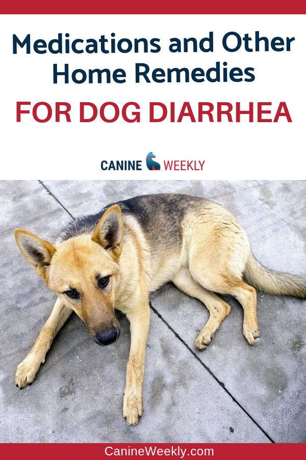 Diarrhea In Dogs Causes Symptoms Treatments And More Diarrhea In Dogs Dog Diarrhea Remedy Dog Has Diarrhea