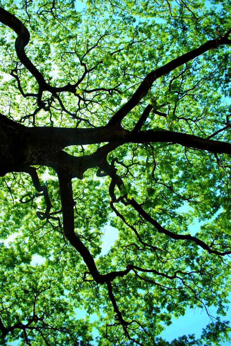 67 best Tree-of-Life jacquard images on Pinterest | Forests ...
