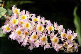 Картинки по запросу необычные цветы