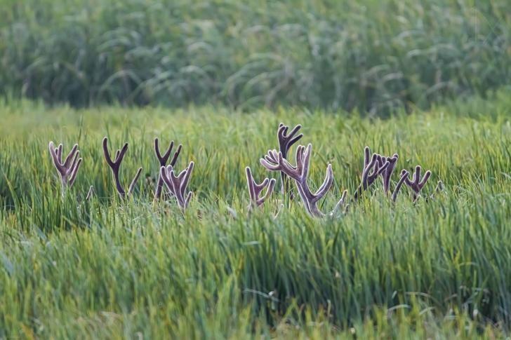 """""""Deer Secret Meeting"""""""