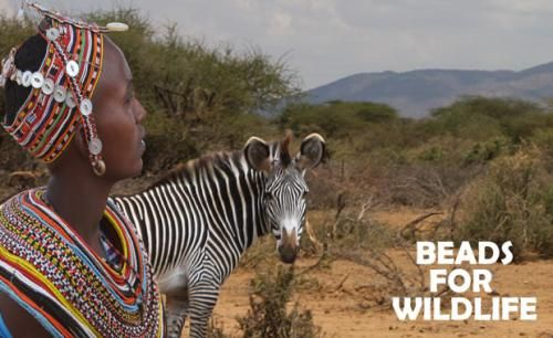 Each handmade Beads for Wildlife piece you purchase from Zoos Vic provides a woman in Northern Kenya with the choice of a reliable income that doesn't impact local wildlife.  You can buy Beads For Wildlife products when you visit our zoos, or online today.