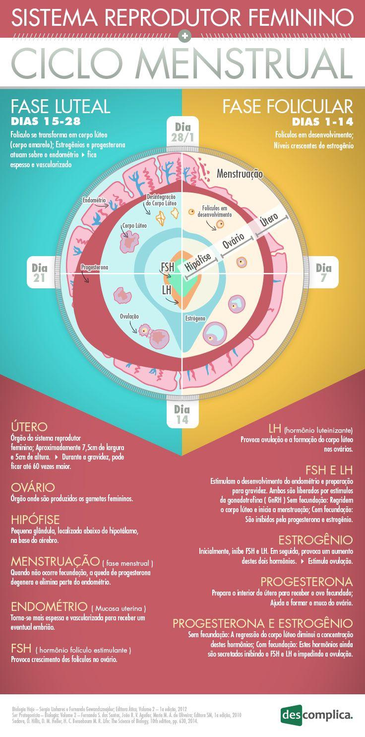 Quer saber como funciona e o que caracteriza um Sistema Reprodutor Feminino? Nós te contamos da melhor maneira: em forma de infográfico! Confira!