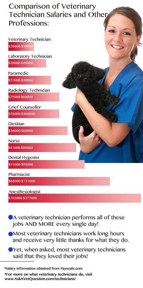 Best 25+ Veterinary technician salary ideas on Pinterest - veterinarian job description