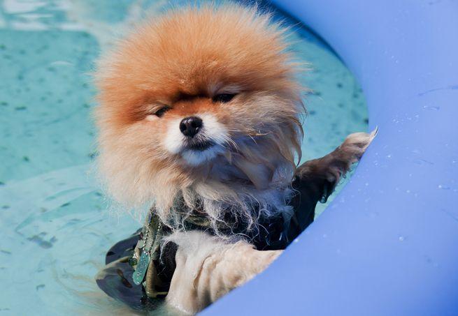 Petsitters: seu animal seguro nas férias: Snow Dogs