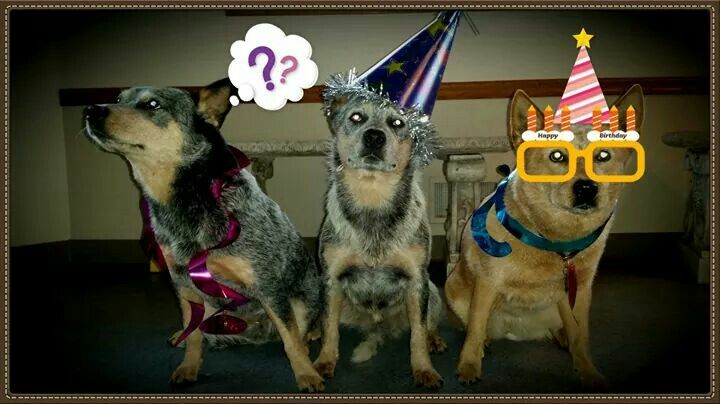 1000+ images about birthday on Pinterest  Wolf Cake, Wild West ...