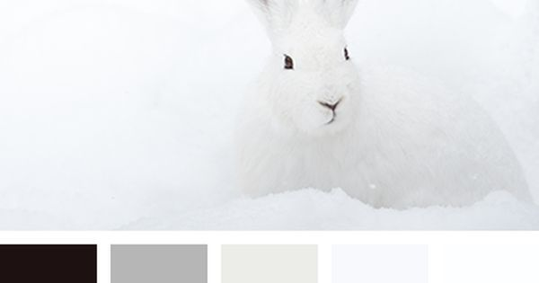 Liked on Pinterest: almost black black color color matching color palette dirty white gray color grayscale house paint colors silver color snow color white color.