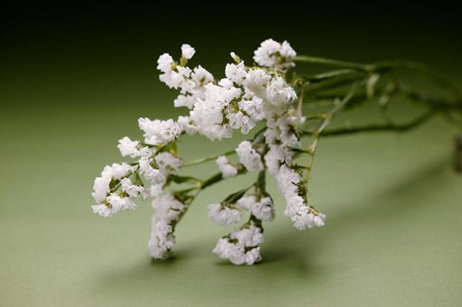 (14G)amarados white