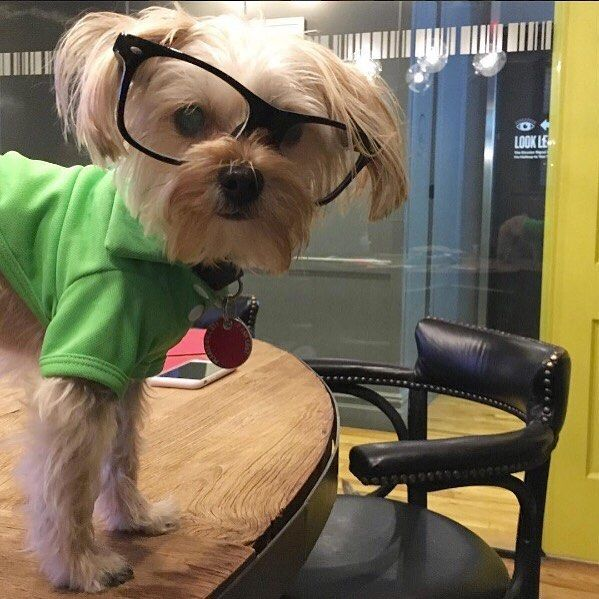 Meeting went well at WeWork Bryant Park.   From @mightylittlelion #dogsofWeWork