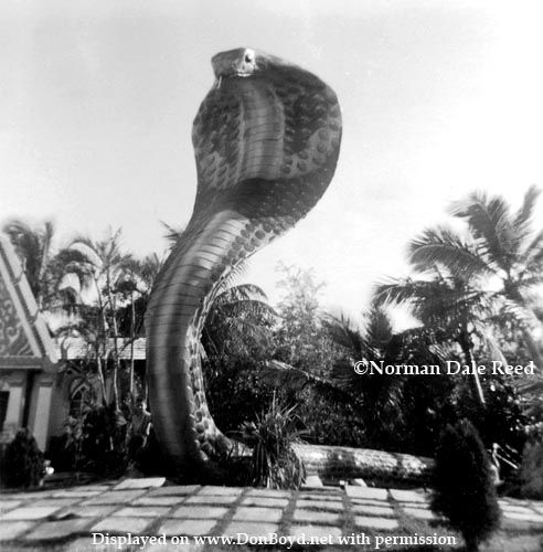 Old Miami Fl: 182 Best Miami Florida 1950's & 60's Images On Pinterest