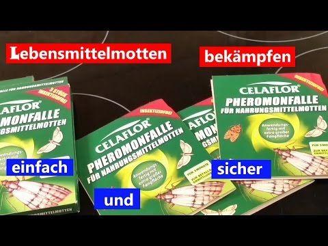 Perfect Lebensmittelmotten Motten Kleidermotten YouTube