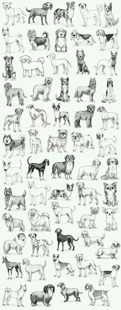 Perritos, perritos, perritos...
