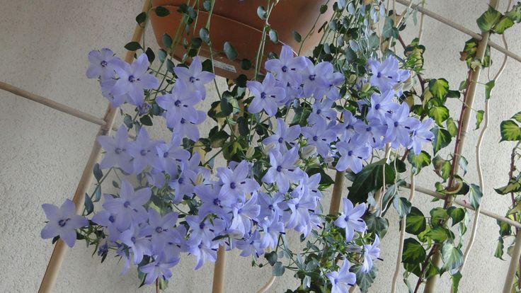 Mahur Bey'in balkon bahçesi... : Photo