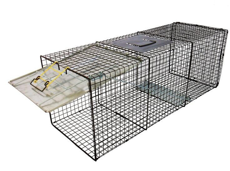 Search Results for Safe Traps Rural King Paloma
