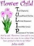 tulip calvin - Google Search