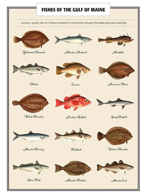 94 best fishing fish identification images on pinterest for Fishing areas near me