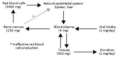 https://en.wikipedia.org/wiki/HFE_hereditary_haemochromatosis