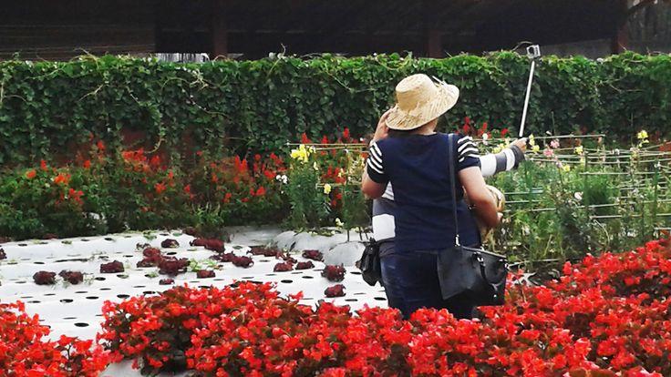 Begonia Flower Gardens, Bandung by Fadjar Ramadhan on 500px