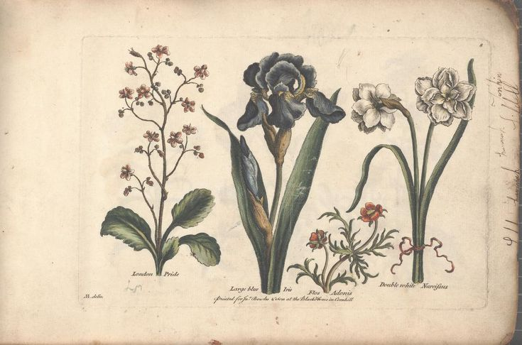 The florist, or, An extensive and curious colle...