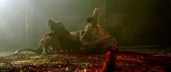The Thing - 1982 - the dog thing / Réalisé par John Carpenter, adapté de la nouvelle Wo goes there ? de John W. Campbell, musique de Ennio Morricone, avec Kurt Russel, Wilford Brimley, Keith David,…