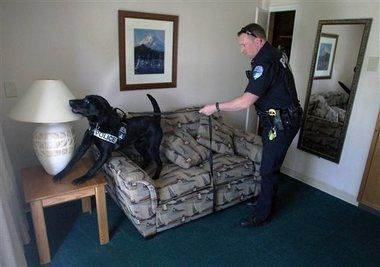 CO Training State's First Weed-Friendly Police Dog | Washington has already begun training new police dogs that do not alert police to marijuana, and Colorado is now getting on board. It's crucial for these two states to train new police dogs because marijuana is no longer illegal, and a false alarm from a drug dog for marijuana would lead to an illegal search.