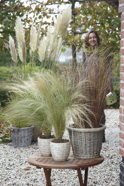 Wonenonline: Herfst? Super leuk met vaste planten
