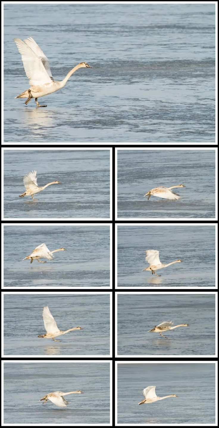 Takeoff from sea ice, by Heikki Rantala