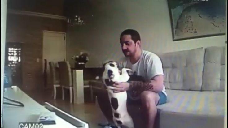 Acusado de maus-tratos a duas cadelas deve prestar depoimento à Polícia Civil nesta terça hora dos protetores conversarem com ele. Do mesmo jeito que ele brincou com as cadelinhas. Não na porta da DP é claro!