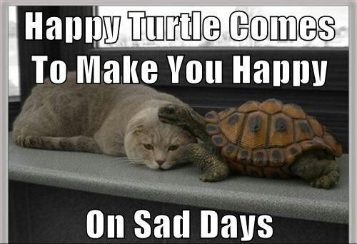 Funny turtle pictures with words - photo#22