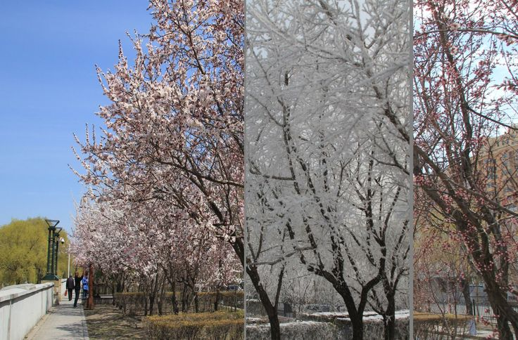 China,Harbin,in four seasons.by Wang Jun