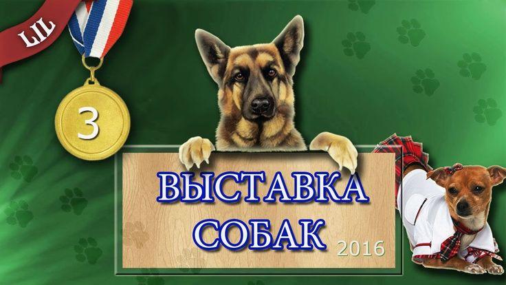 Часть III   Международная выставка собак Кубок Северного Кавказа 2016  W...