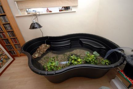 Red Slider Turtle Habitat Aquarium Above: A surface mount pond in use with external canister filters.