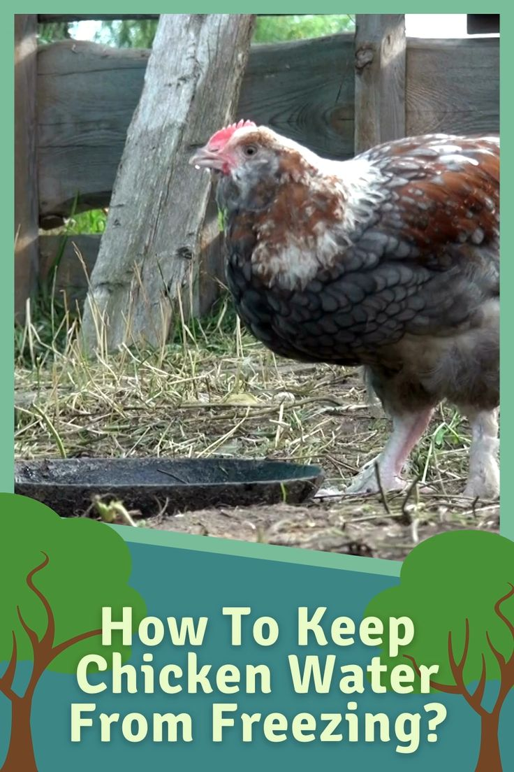 How to Keep Chicken Water From Freezing 10 Hacks You Can