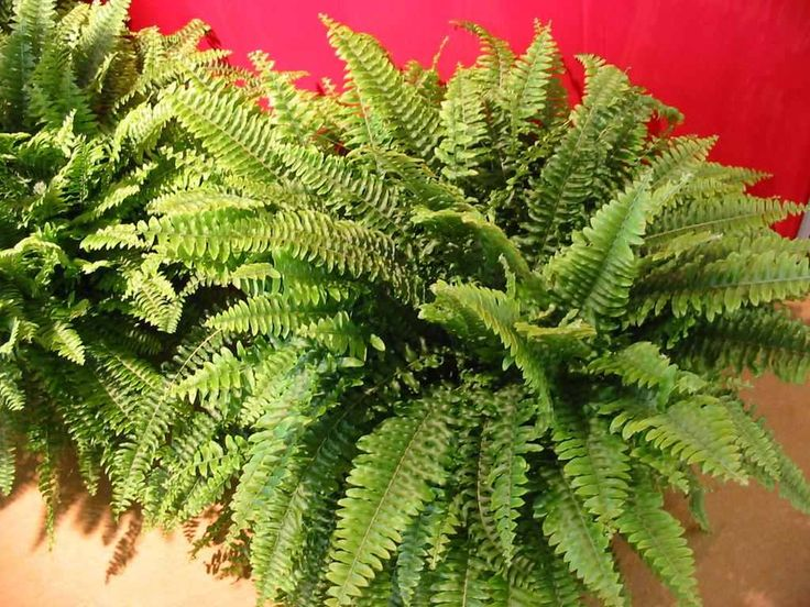 Τα καλύτερα φυτά που αφαιρούν τις τοξίνες από τους εσωτερικούς χώρους