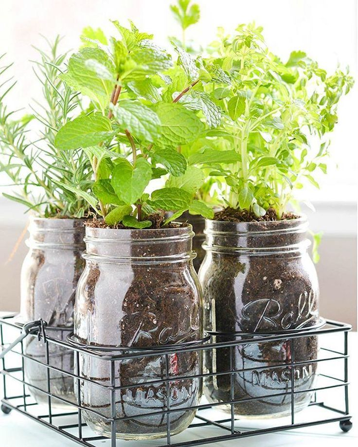 Herb Garden Ideas For A Balcony top 25+ best mason jar herb garden ideas on pinterest   mason jar