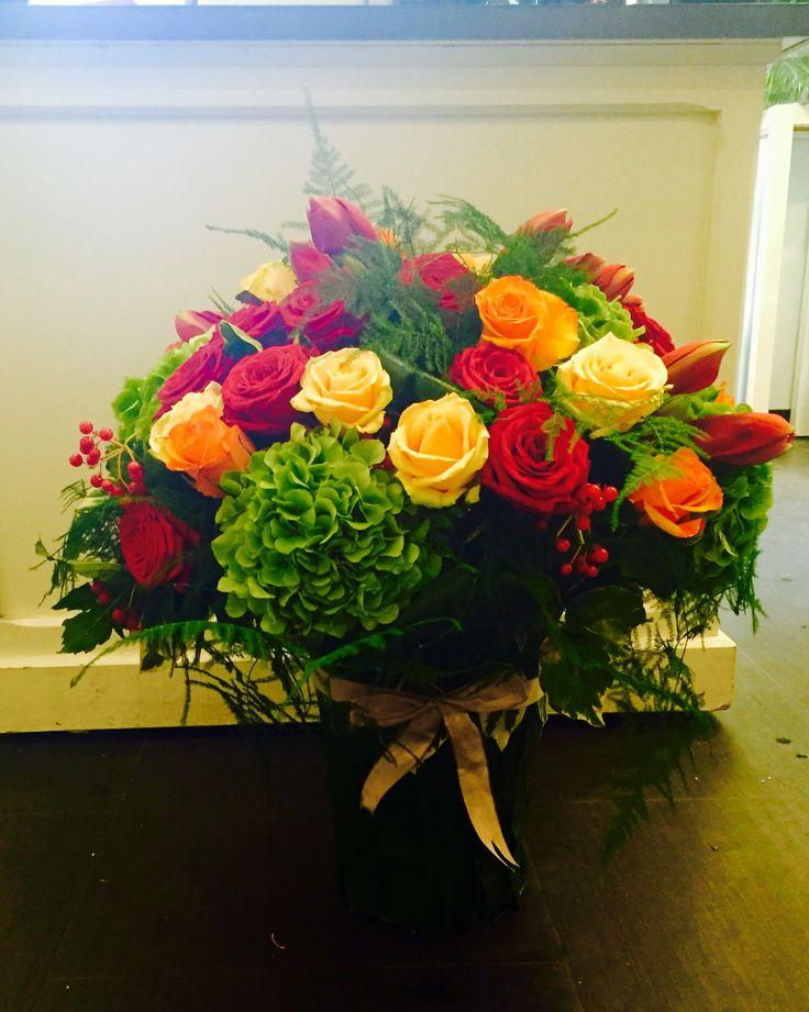 Hortensias roses compactum