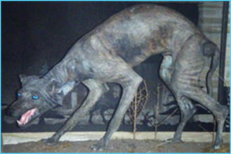 We have actual bodies of these creatures with DNA to back it up. Why hasn't there been more study into them?