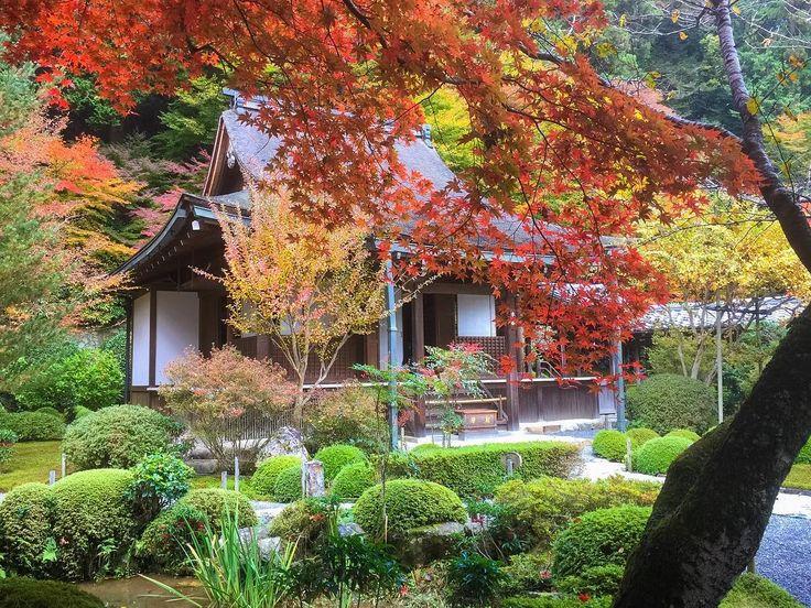 #Kyoto #京都 #寂光院 #大原 #歴史  この感性はちょっと日本人独特かもしれないんで、日本語表記で。 京都の中で、僕にとってはとてもお気に入りの場所。 ここはお庭が良く手入れされて自然美が素晴らしいだけでなく、歴史的なヒューマンドラマの舞台であり、人里離れた隠遁生活を感じさせます。  平安時代の平清盛の時代の栄華から源氏に滅ぼされて衰退の道を辿ってきた後、清盛の娘、建礼門院徳子が隠遁生活を送り心仏に祈りを捧げた場所として知られています。当時の都会での裕福な生活を送ってきた彼女が、戦乱でかの人里離れた地域での生活を余儀なくされた時、果たしてどんな気持ちだったのでしょう。  静かな中で心が澄んだ気持ちになる、って言った僕の気持ち以上に大変なものがあったのかもしれません。 #京都旅行 #隠遁生活 #リラックス #静寂の世界 #naturephotography #kyototrip #autumnleaves #紅葉