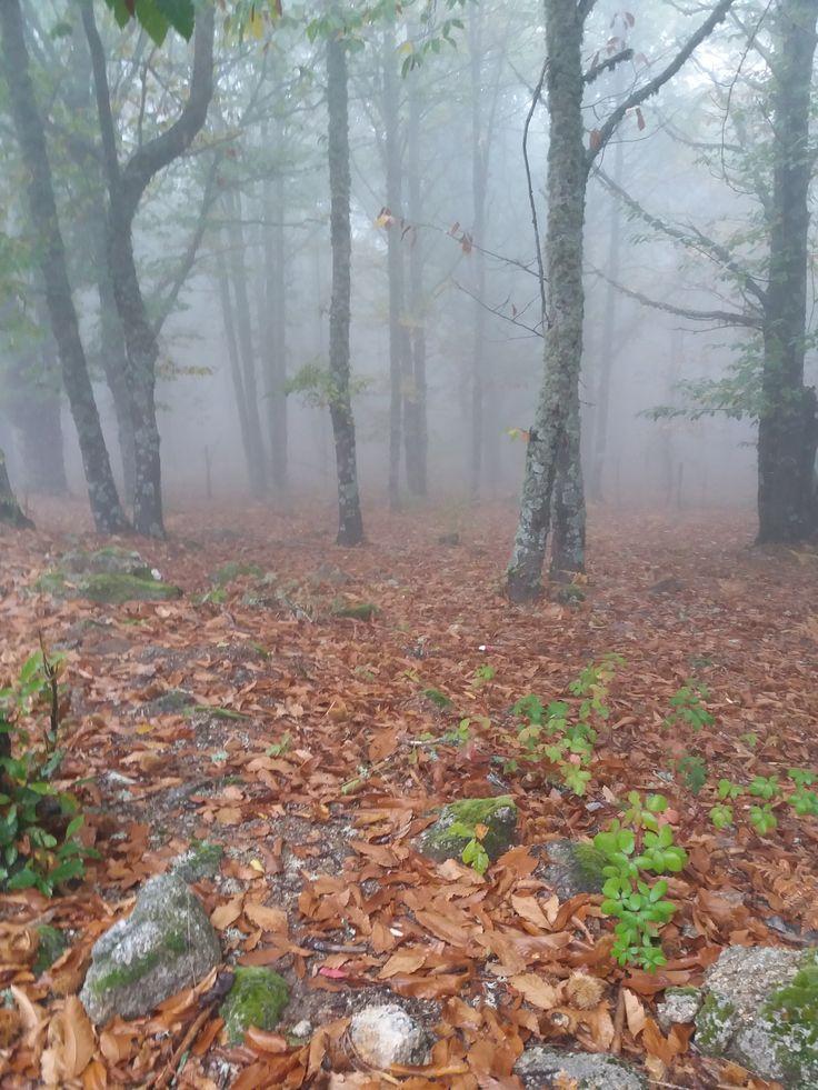 Sierra de San Vicente (Toledo) - Entre nieblas y castaños (4)