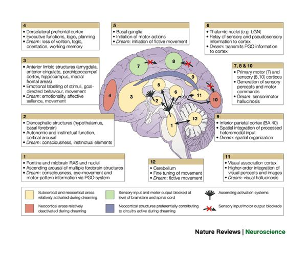 Learning resources for Medical Neuroscience - Getting ...
