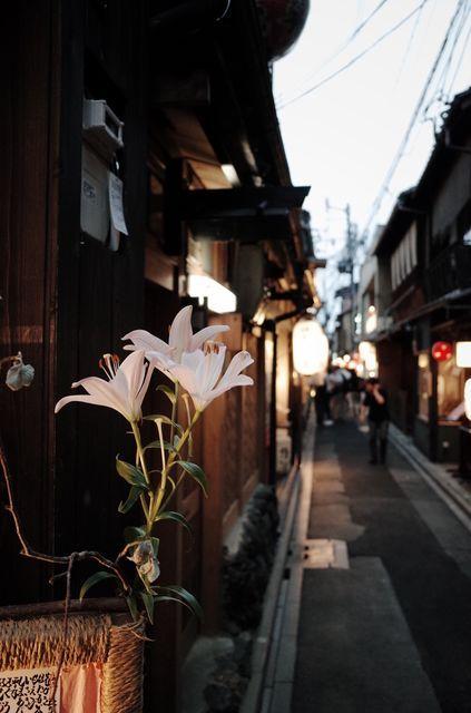 京のろおじ(路地) 京都 Streetphotography, Kyoto by dmwajt on EyeEm JAPON