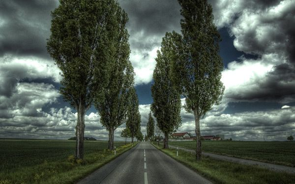 Showcase of Road and Path Photography: 50 Exquisite ShotsThe Roads, Autumn Roads, 50 Beautiful, Beautiful Trees, Cityscapes Photographers, Beautiful Photographers, Roads Trips, Paths Photography, Landscapes Photography