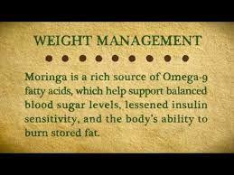 Image result for moringa oleifera weight loss
