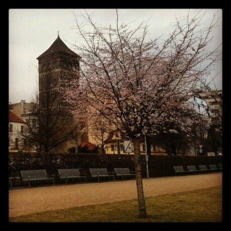 First cherry in blossom - spring has already arrived to Prague! #HotelClement