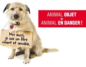 au regard de la loi, les animaux sont des objets... il est temps que cela change et que la loi reconnaisse que nos compagnons sont des êtres vivants, doués de sentiments et de sensibilité !... pour y aider, signez la pétition en ligne et/ou imprimez-la et faites-la circuler autour de vous...