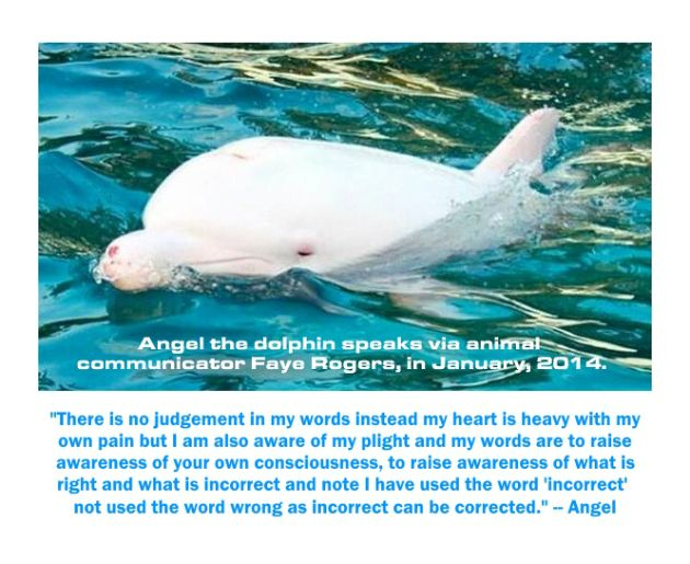 Angel - the albino dolphin - speak up via animal communicator Faye Rogers.