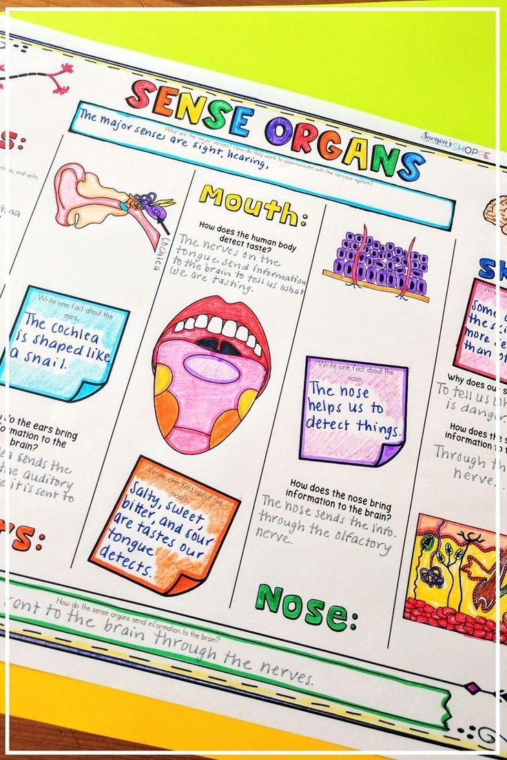 Sense Organs Activity Free Teach Your Grade 4 5 And 6