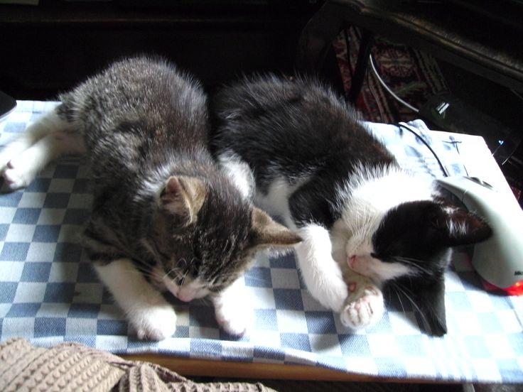 09-07-2014 - Moe van het spelen en rabbezakken eindelijk slapen - pal naast de pc muis :-)