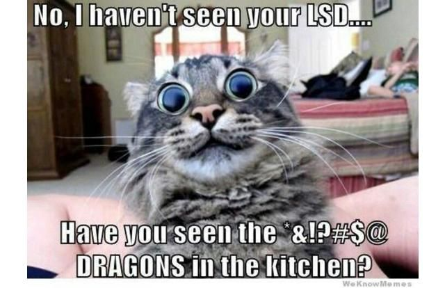 You Can Haz Memes? 31 Hilarious Cat Memes From Around The Internet (Slide #8) - Pawsome